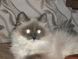 моя Люсьен