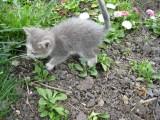 Котёнок Следопыт