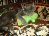 Моя Маша с любимой игрушкой.