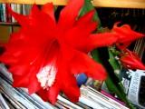 Уменя даже кактус в книгах цветет!