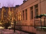 Деревья-маячки - дорога к садику  светла и сказочна!