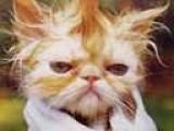 вымытый кот