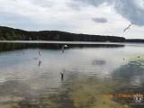 чайки над прозрачной водой...