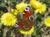Бабочка и цветы!!!