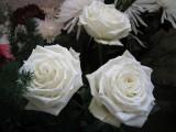 Снежные розы.