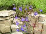 Такие милые цветы
