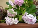 Цветы у входа в оранжерею