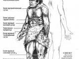 Отличия неандертальца от современного человека