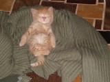 Ириска спит