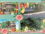 ГБДОУ №133  - Санкт-Петербург, Санкт-Петербург