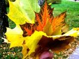 Здравствуй, осень! Автор: Н.И.Колюшина