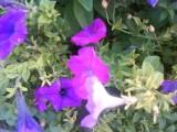 `Красивые цветы`