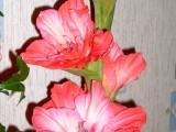 мои цветы