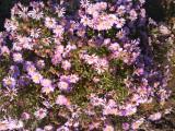 Прекраные цветы