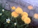 Весна 2009(1)