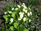Первые весенние цветы!