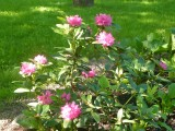 Цветы в `Диво острове`