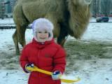 Верблюд за окном нашего дома