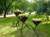 Сквер на улице Ленина, цветы