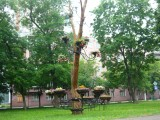 Дерево ожило!