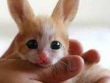 Кошкокролик)