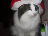 Барсик в маскарадном костюме готовится к празднику!