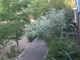 А у нас во дворе