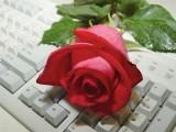 Роза для вас