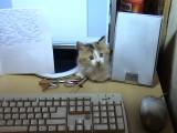 Ну и где здесь мышка?
