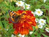 Поцелуй летающего цветка.
