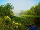 цветущая поляна