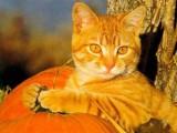 Кошка-очаровашка