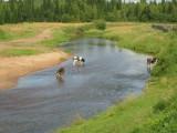 Река Тайшетка