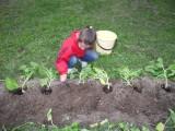 расти большая тыква и кабачок