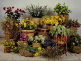 Цветы в карзинках.