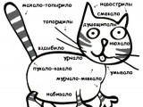 Схема кота.