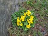 Горное солнышко. Архыз. 4-10 мая 2012 год