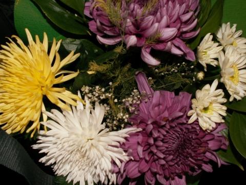 Краски осени - Городские цветы