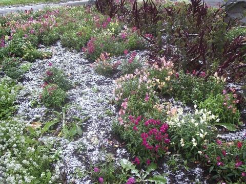 первый снег в городе - Городские цветы