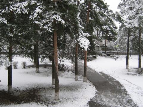 Первый снег - Фото сообщество