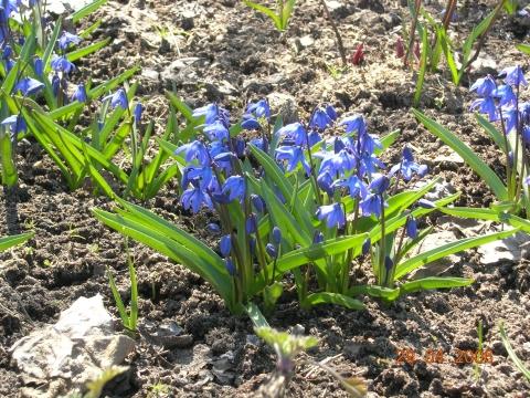 Первые цветы - Прекрасное рядом!