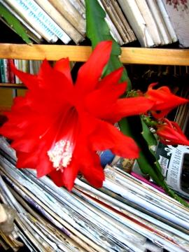 Уменя даже кактус в книгах цветет! - Прекрасное рядом!