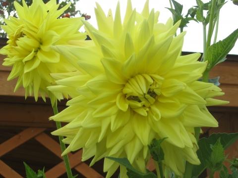 Солнышко - Городские цветы