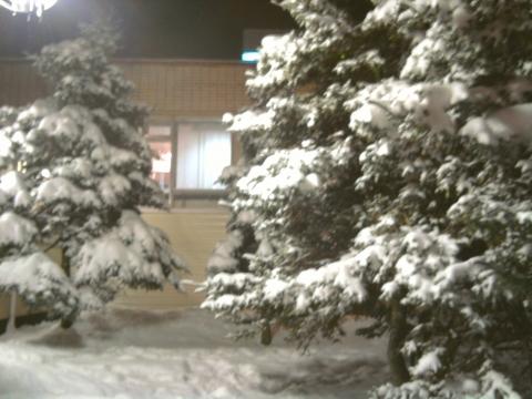 Городские ели в снегу - Любовь Валентиновна Колганова