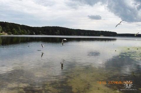 чайки над прозрачной водой... - Отдыхаю!!!