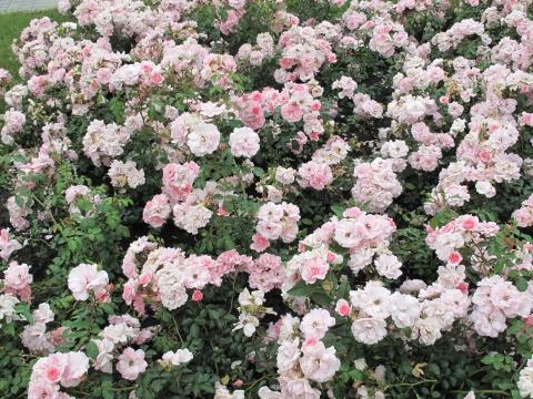 Роскошь - Городские цветы