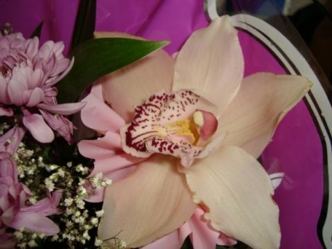Орхидея - Ольга Ивановна Степанова