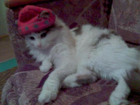 мой кот Мартин - Елена Дмитриевна Овсянникова