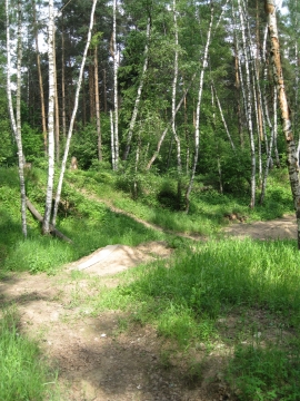 В лесу. - Отдыхаю!!!