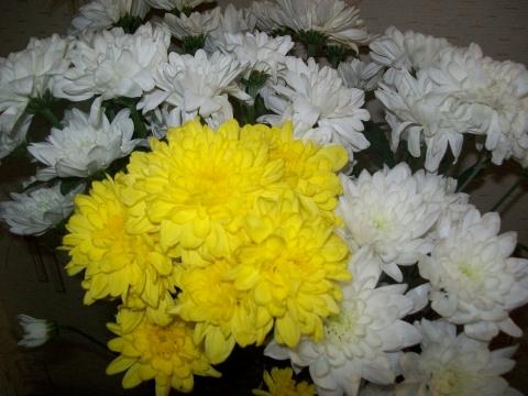 17 - Городские цветы